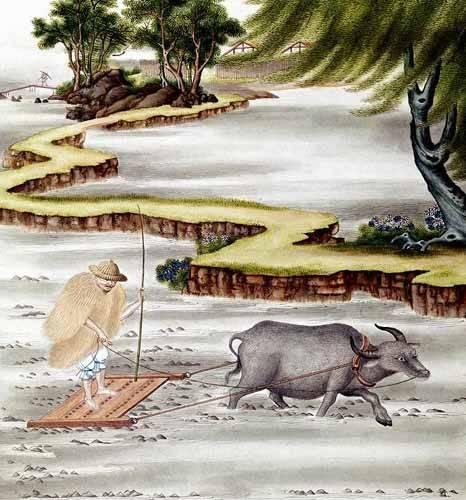 quadros-etnicos-e-orientais - Quadro -Campesino labrando el arrozal- - _Anónimo Chino