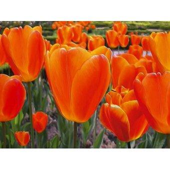 quadros de flores - Quadro -Moderno CM3589- - Medeiros, Celito