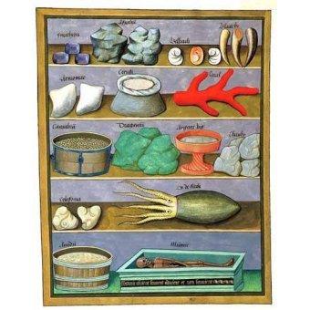 - Quadro -Libro de las medicinas sencillas 1- - Platearius, Matthaeus