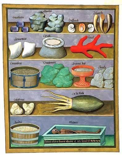 cuadros decorativos - Cuadro -Libro de las medicinas sencillas 1- - Platearius, Matthaeus
