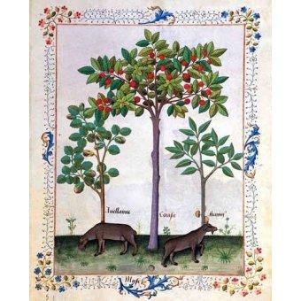 - Quadro -Libro de las medicinas sencillas 3- - Platearius, Matthaeus