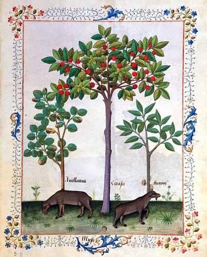 cuadros decorativos - Cuadro -Libro de las medicinas sencillas 3- - Platearius, Matthaeus