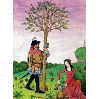 - Quadro -Libro de las medicinas sencillas 4- - Platearius, Matthaeus