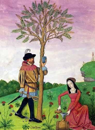 cuadros decorativos - Cuadro -Libro de las medicinas sencillas 4- - Platearius, Matthaeus