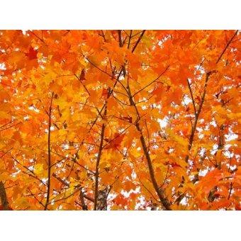 fotografia  - Quadro -CUGAT-01- - Naturaleza, Fotografia de