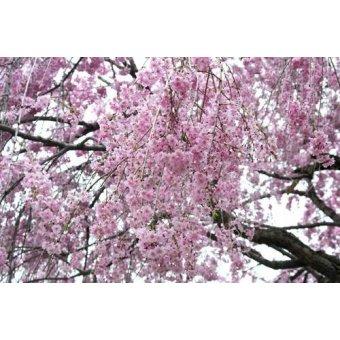 cuadros de fotografia - Cuadro -CUGAT-14- - Naturaleza, Fotografia de