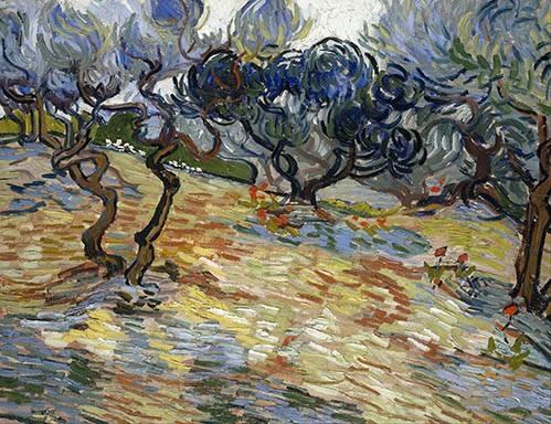 quadros-de-paisagens - Quadro -Olive Trees, 1889- - Van Gogh, Vincent