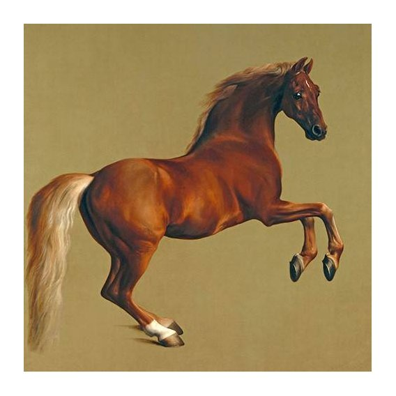 fotos de fauna - Quadro -Whistlejacket- (caballos)