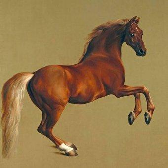 quadros de animais - Quadro -Whistlejacket- (caballos) - Stubbs, George