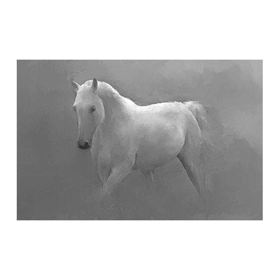 fotos de fauna - Quadro -Caballo blanco-