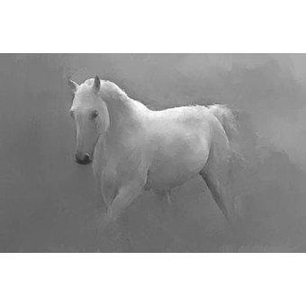 cuadros de fauna - Cuadro -Caballo blanco- - _Anónimo Español
