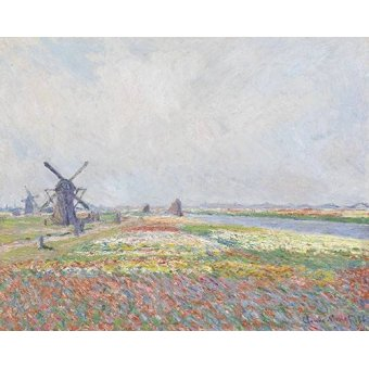 - Quadro -Tulip Fields near The Hague, 1886- - Monet, Claude