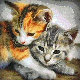 quadros de animais - Quadro -Moderno CM10150- - Medeiros, Celito