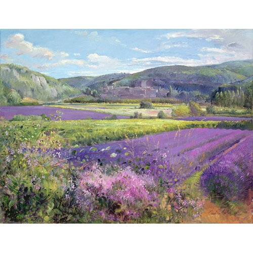 Quadro -Lavender Fields in Old Provence -