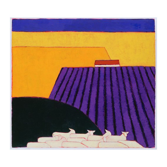 Quadro -Sheep and Lavender Fields, 2004-