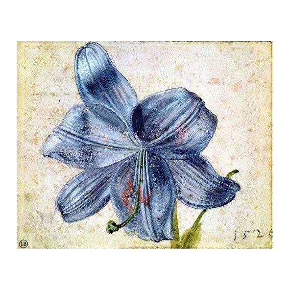 imagens de flores - Quadro -Estudio de una lila -