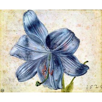 quadros de flores - Quadro -Estudio de una lila - - Dürer, Albrecht (Albert Durer)