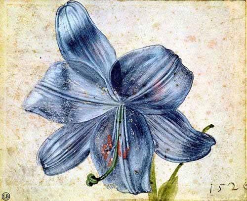 quadros-de-flores - Quadro -Estudio de una lila - - Dürer, Albrecht (Albert Durer)