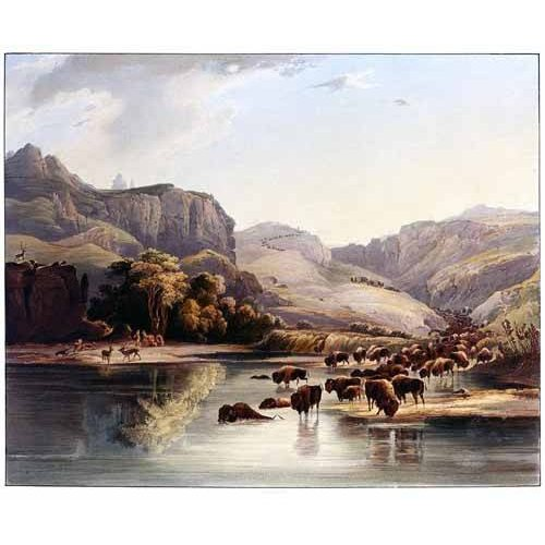 imagens de mapas, gravuras e aquarelas - Quadro -Manadas de bisontes y alces-