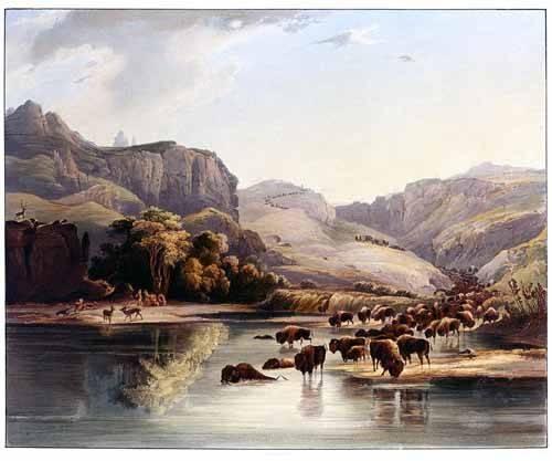 cuadros de mapas, grabados y acuarelas - Cuadro -Manadas de bisontes y alces- - Bodmer, Charles