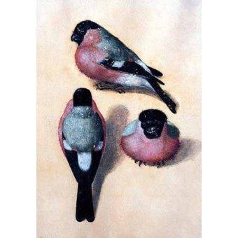quadros de animais - Quadro -Un pájaro en tres posiciones- - Dürer, Albrecht (Albert Durer)
