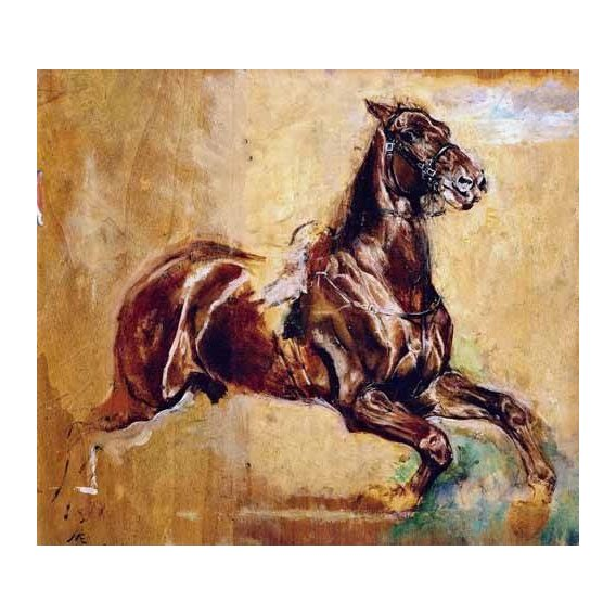fotos de fauna - Quadro -Estudio de caballo-
