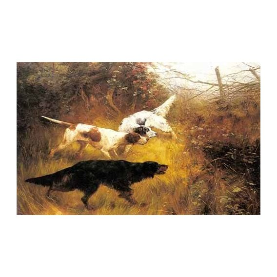 fotos de fauna - Quadro -Three Pointers in a Landscape-