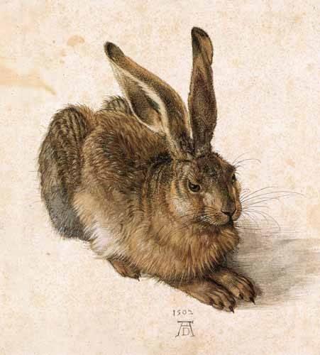 quadros-de-animais - Quadro -Joven Liebre- - Dürer, Albrecht (Albert Durer)